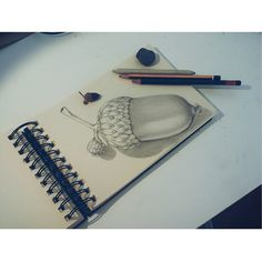 Exercitando...  #fixaroinstante #draw #drawing #graphite #art #sketch #sketchbook #bolota #acorn #art