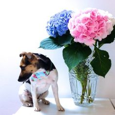 pink blue and white hydrangeas from columbia road market in london - lifestyle blogger flower market post on Pepé & Co the style savvy jack russell