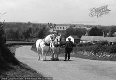Pantasaph, A Pair Of Working Horses From The Francis Frith Collection. Agriculture, Farming, English Village, Work Horses, Vintage Farm, Great British, British History, Vintage Images, Wales