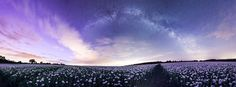Northen lights seen over Dorset poppies with Andromeda Galaxy and the Milky Way Northen Lights, Multiple Images, Andromeda Galaxy, Panoramic Images, Photography Workshops, Milky Way, Night Skies, Poppies, Planets