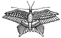 Chimeric butterfly