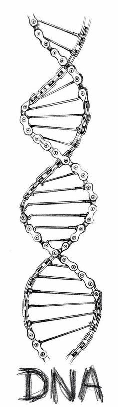 Pencil on paper drawing. When cycling is part of your DNA. Cycling Tattoo, Bicycle Tattoo, Bike Tattoos, Motorcycle Tattoos, Bicycle Art, Cycling Art, Motorcycle Helmet, Bicycle Design, Tracker Motorcycle