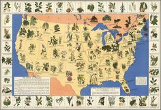 """Medicinal Plant Map of the United States of America."" Edwin Newcomb and the National Wholesale Druggists' Association, 1932. Click on map for larger version."