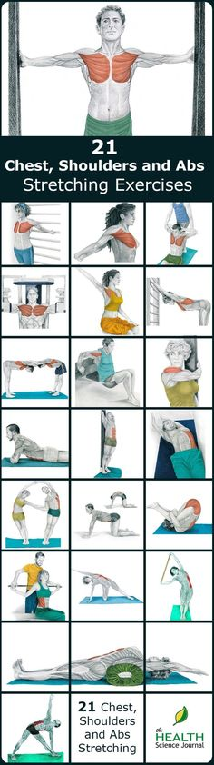 21 illustrations of chest, shoulders and abs stretching exercises, showing you exactly which muscle you are exercising.