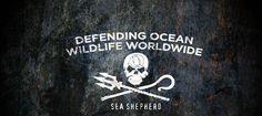 The Sea Shepherds