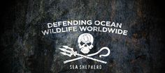 Sea Shepherd Conservation Society (SSCS) is an international non-profit, marine wildlife conservation organization. Our mission is to end the destruction of habitat and slaughter of wildlife in the world's oceans in order to conserve and protect ecosystems and species.