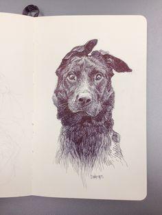 Dan Mora - Confused Dog via Behance.