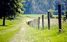 nature fence fence fencing meadow grass green tree tree foliage leaves flower flowers trees tree flowers fence day path blur nature background wallpaper widescreen full screen widescreen hd wallpapers