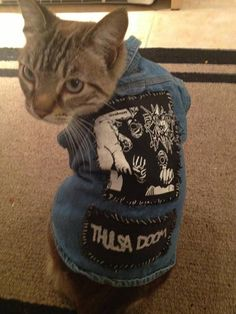 Cats in punk vests: yes