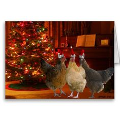 Christmas Chickens Funny Greeting Cards