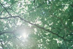 In the leaves of green | Flickr - Photo Sharing!