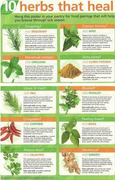 10 Herbs ~~ That Heal