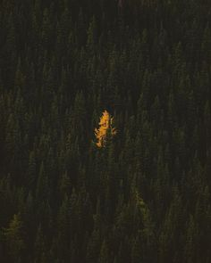 Stand out among the crowd 🌲 cc: @alexstrohl
