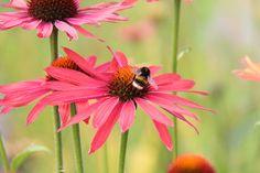 Landing Page - Hortus Loci Center Part, Centre, Nursery, Plants, Articles, Animals, Group, Hot, Summer