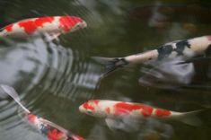Cómo construir un filtro para un estanque de peces con una cubeta de plástico | eHow en Español