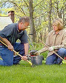 Lawn repair tips.