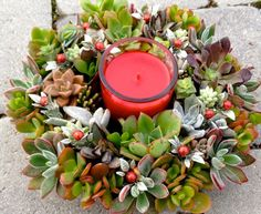Try something new this holiday season with a colorful succulent wreath arrangement. Succulent Centerpieces, Succulent Wreath, Succulent Gifts, Holiday Centerpieces, Succulent Arrangements, Succulent Planters, Centerpiece Ideas, Floral Arrangement, Hanging Planters