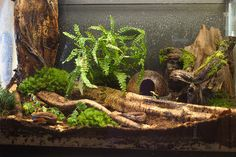 Discover Black Jungle Terrarium Supply in Montague, Massachusetts: Small shop offering mail-order rare and exotic plants. Terrarium Diy, Terrariums, Terrarium Reptile, Terrarium Supplies, Frog Habitat, Reptile Habitat, Reptile Room, Reptile Cage, Reptile House