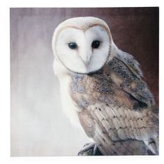 Wilko Owl Canvas