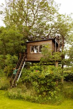 the selby , Angleterre, cabane dans les arbres