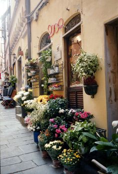 A lovely floral shop in Monterosso, Italy