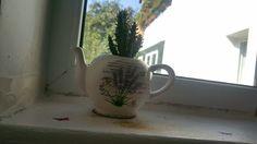 Visit the post for more. Cactus, Mugs, Tableware, Photography, Dinnerware, Photograph, Tablewares, Fotografie, Cactus Plants