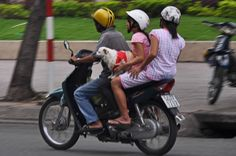 #dogs on #motorcycles - News VietNamNet