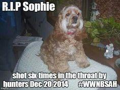 RIP,Sophie.<3