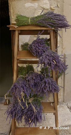 I am harvesting lavender now, beautiful