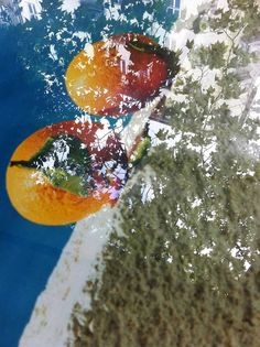 Oranges 20110 by Jessica Backhaus