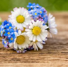 Daisy and forget me not