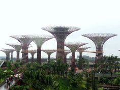 Huge Biomimetic 'Supertrees' Taking Root on Singapore's Waterfront