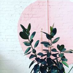 This brick with a pop of colour and greenery! You can't go wrong! Green plant pink wall style styling girly feminine contrast home house garden interior style design decor styling paint botanical tropics tropical botanical