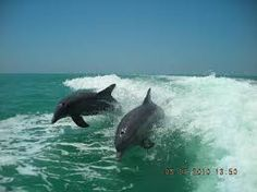 sanibel island - Google Search