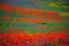 Green pastures by Sandra Bartocha