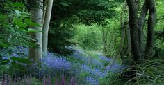 Just Pinned to Forests: Woodland garden. Beautiful. Unfortunately my two dogs would romp through it and leave nothing but colorful trampled carnage in their wake. http://ift.tt/2qPsgep