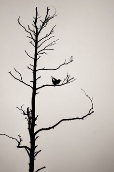 ARTFINDER: Bird and his dried tree by Koit Ratas - Bird and her lonely tree, he does not leave this tree, so long as he is still standing.