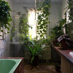 The greenest room in the house 🌿💦