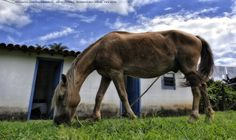 https://flic.kr/p/DzD39b | Recanto Das Cachoeiras  10 | Pousada Rural Facenda Recanto Das Cachoeiras . Sete Lagoas . Minas Gerais / Artexpreso . Rodriguez Udias / Sorrisos do Brasil . Fotografia . Dic 2015 / Fev 2016 (*PHOTOCHROME system edition)