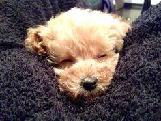 sleeping ted
