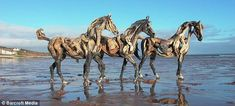 Life-like horse sculptures made entirely of driftwood washed up on the beach. Created by artist Heather Jansch