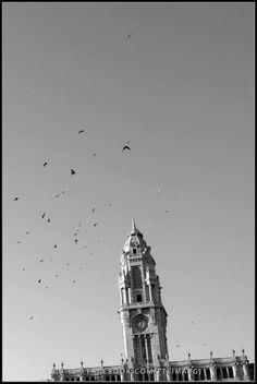 Câmara Municipal do Porto / Ayuntamiento de Oporto / Oporto City Council [2012 - Porto / Oporto - Portugal] #fotografia #fotografias #photography #foto #fotos #photo #photos #local #locais #locals #cidade #cidades #ciudad #ciudades #city #cities #europa #europe #baixa #baja #downtown @Visit Portugal @ePortugal @WeBook Porto @OPORTO COOL @Oporto Lobers
