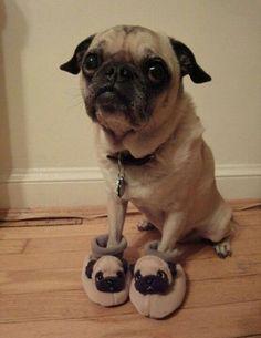 Too Puggin' cute