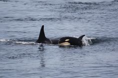 L94 Calypso with 6 month old son L121 Photo by Melisa Pinnow