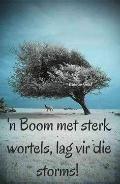 New Perspective, Meet, Plants, Afrikaans, Image, God, Dios, Allah, Plant