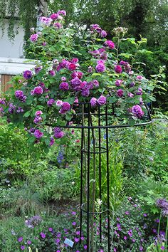 Garden Obelisks - Rose Umbrella Giverny
