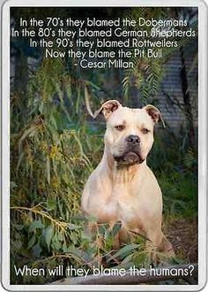 Fridge Magnet Pit Bull dog Cesar Millan Quote Staffordshire bull terrier pet in Collectables   eBay