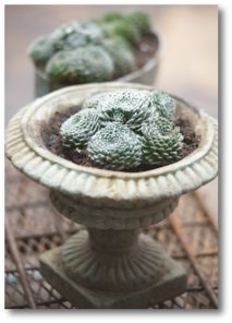 New Weekly Article - Potted and Perfect || Your Home and Lifestyle