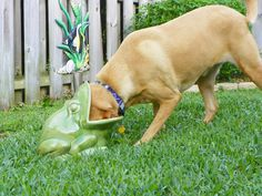......it's a frog eat dog world.......