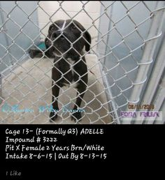 URGENT! Due out Thursday 8-13; needs out of AC first thing Friday morning 8-14 ▪ No. 575-624-6722 Roswell Animal Control 705 E. McGaffey, #Roswell, #NM 88201▪ ✔ ADELLE ▪ 2-year-old ▪ Pit X ▪ Female ▪ Brown/White ▪ Cage #13 (Prev. Q3) | Impound #3222 ▪ Intake 8-06-15 | Due Out 8-13-15  LINK: https://m.facebook.com/photo.php?fbid=484245505076785&id=176246809209991&set=a.254112501423421.1073741867.176246809209991&source=48 ▪  MAIN PAGE LINK: https://m.facebook.com/RoswellUrgentAnimalsAtAnimalCo